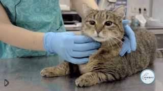 Совет ветеринара: как дать таблетку коту - Видео онлайн