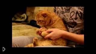 Смотреть онлайн Способ подстричь когти ненормальному коту