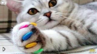 Смотреть онлайн Лайфхаки для счастливых владельцев котиков