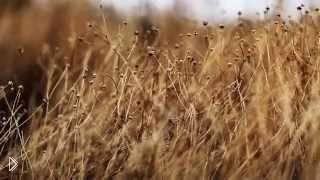 Смотреть онлайн Охота осенью на куропатку