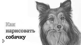 Смотреть онлайн Как нарисовать собаку простым карандашом
