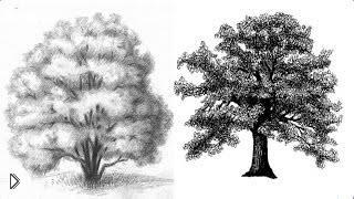 Смотреть онлайн Как нарисовать большое дерево простым карандашом