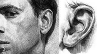 Смотреть онлайн Рисуем ухо человека в увеличенном размере