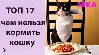 Смотреть онлайн Чем нельзя кормить кота ни в коем случае