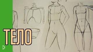 Смотреть онлайн Рисуем тело человека: правильные пропорции