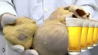 Смотреть онлайн Вот почему нельзя пить пиво каждый день