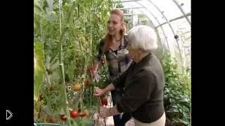 Как вырастить помидоры без полива - Видео онлайн