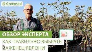 Смотреть онлайн Правила выбора саженца яблони