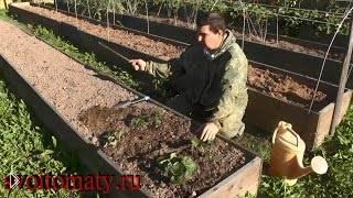Правила посадки и выращивания садовой земляники - Видео онлайн