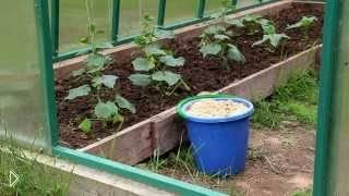 Смотреть онлайн Как можно использовать опилки в огороде