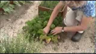 Как приготовить растительное удобрение из крапивы - Видео онлайн