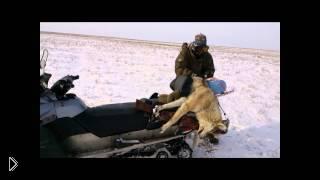 Смотреть онлайн Урок охоты весной на волков в поле