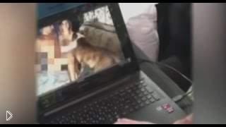 Смотреть онлайн Актер Алексей Панин с собакой развлекаются в кровати