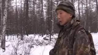 Смотреть онлайн Как правильно пойти на охоту на глухаря осенью