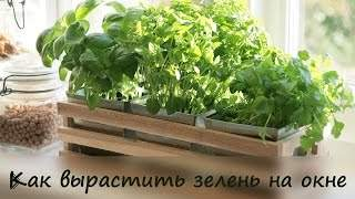 Руккола, базилик и розмарин выращиваем в квартире - Видео онлайн