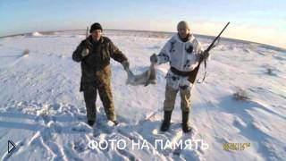 Смотреть онлайн Зимняя охота на зайца по следам