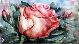 Смотреть онлайн Идея рисунка красками: роза акварелью