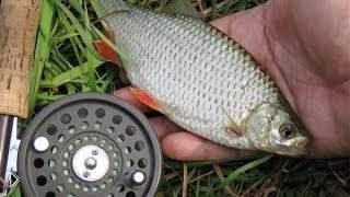 Смотреть онлайн Как ловить плотву осенью (рыбалка)
