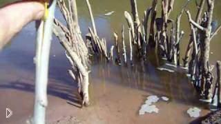 Смотреть онлайн Как сделать водную ловушку для рыбы своими руками