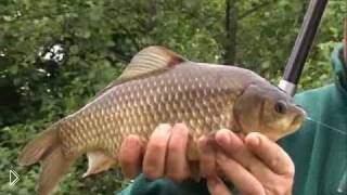 Смотреть онлайн Особенности рыбалки на карася