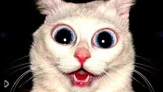 Смотреть онлайн Подборка смешных Коуб приколов с котами