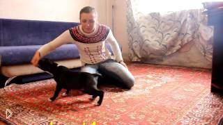 Смотреть онлайн Как приучить собаку к лотку в квартире