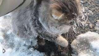 Смотреть онлайн Кот примерз ко льду, люди добрые спасли