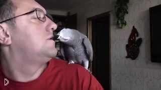 Смотреть онлайн Прикол про попугая говорящего на русском языке