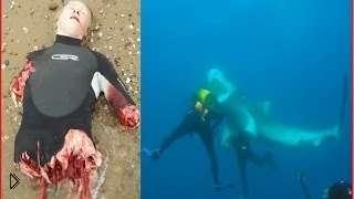 Смотреть онлайн Подборка: Рыбы и морские животные нападают на людей