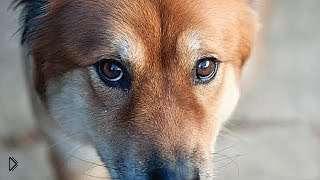 Смотреть онлайн Несколько фактов про зрение животных