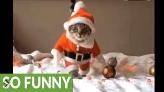 Смотреть онлайн Смешной кот в одежде Санта-Клауса