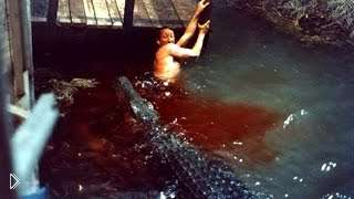 Смотреть онлайн Подборка: Крокодилы нападают на людей