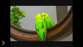 Смотреть онлайн Подборка: Попугаи разговаривают как человек