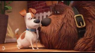 Смотреть онлайн Платный мультфильм: Тайная жизнь домашних животных, 2016 года