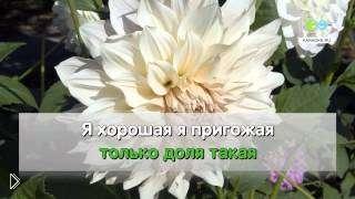 Смотреть онлайн Караоке: Надежда Кадышева - Напилася я пьяна
