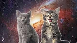 Смотреть онлайн Песня сделана из мурчания котят