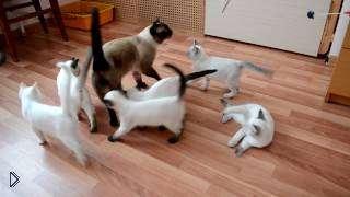 Смотреть онлайн Как котята встречают своего отца
