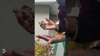 Смотреть онлайн Мужчина убивает улей с осами вручную