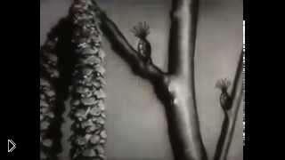 Смотреть онлайн Как происходит оплодотворение растений