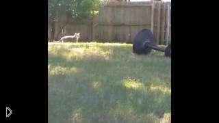 Смотреть онлайн Кот пытался поймать птицу, но облился водой