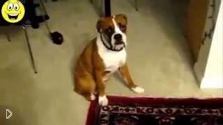 Смотреть онлайн Подборка: Реакция собак на пукающий звук