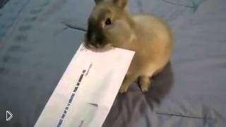 Смотреть онлайн Как с помощью кролика открыть письмо
