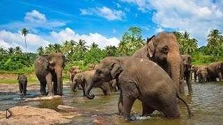 Смотреть онлайн Фильм о дикой природе и животных Шри-Ланки