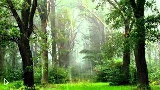 Смотреть онлайн Успокаивающая музыка для сна: звуки природы