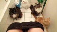 Смотреть онлайн Новый сборник приколов про кошек