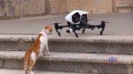 Смотреть онлайн Подборка: Коты против квадрокоптеров