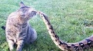 Смотреть онлайн Подборка: Кошки против разных животных