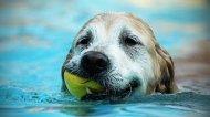 Смотреть онлайн Подборка: Собаки развлекаются с водой