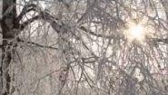 Смотреть онлайн Аудио стих Есенина «Белая береза»