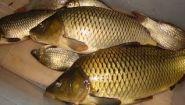 Смотреть онлайн Бизнес идея: разведение и продажа рыбы